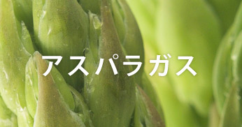 藤崎産品 アスパラガス