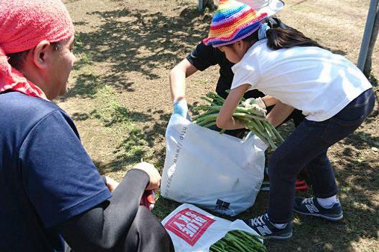 アスパラ収穫体験で親子の触れ合い